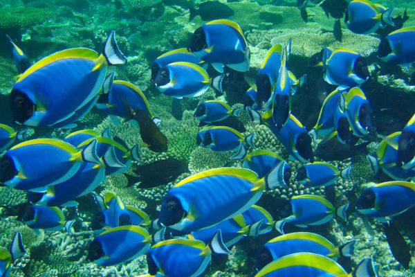 gangehi-diving-08